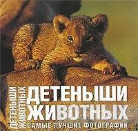 Детеныши животных. Самые лучшие фотографии